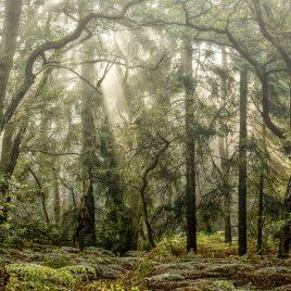 Mystical Forrest